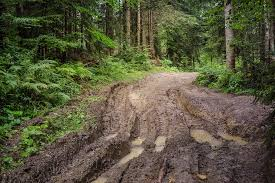 free photo forest way mud track tree free image on pixabay