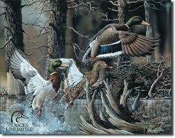 beaver pond ducks unlimited tin