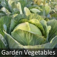 vegetable plants vegetable plug plants brookside nursery