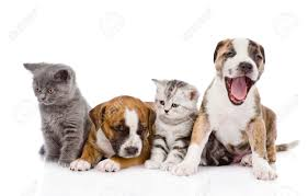 dogs and cats stock photos royalty free dogs and cats images and