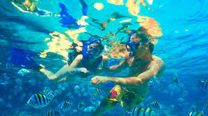 California snorkeling images Catalina island guided snorkel tour catalina tours jpg