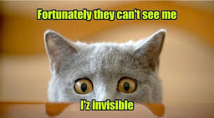 Invisible Cat Memes - i can has cheezburger invisible funny animals online