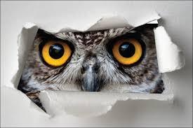 sticker trompe oeil sticker trompe l u0027oeil yeux de hibou art déco stickers