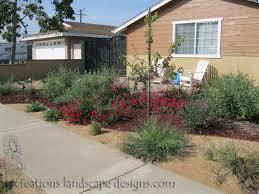 bay area native plants this garden is a mixture of drought tolerant plants succulents
