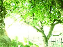 bright green trees by zaretii on deviantart