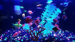 freshwater tropical fish u0026 plants u2013 freshwater direct