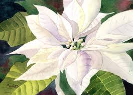 white poinsettia s watercolors white poinsettia