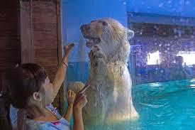 Two Polar Bears In A Bathtub World U0027s Saddest Polar Bear U0027 Could Be Freed After A Million Sign