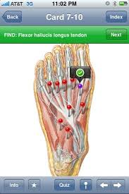 Human Anatomy Flashcards Netter U0027s Musculoskeletal Flash Cards Iphone App Review