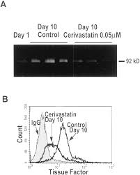 an hmg coa reductase inhibitor cerivastatin suppresses growth of