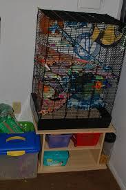 Large Ferret Cage 33 Best Rat Habitats Images On Pinterest Pet Rats Ferret Cage