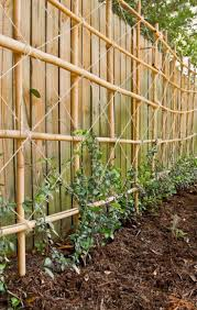 24 best garden trellis espalier images on pinterest garden
