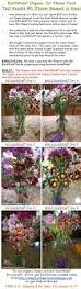 26 best earthpods plant food images on pinterest flower plants