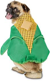 dog candy corn witch costume about petco images