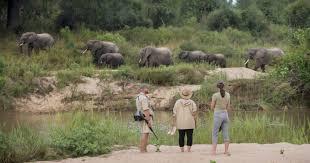 african safari animals timbavati south africa safari safari information for your south