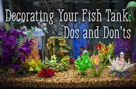decorating your fish tank dos and don ts pethelpful