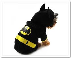 Cheap Dog Costumes Halloween 25 Batman Dog Costume Ideas Bat Dog