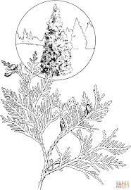 white cedar coloring page free printable coloring pages