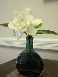 yard bouquet 11 gardenias yikes money