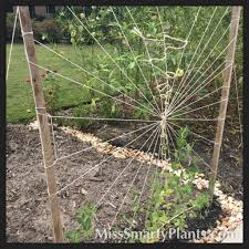 creative string trellises miss smarty plants
