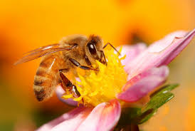 Concrete Sting Cost Estimate by How Not To Get Stung By Bees Networx
