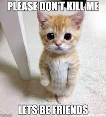 Kill Me Meme - cute cat meme imgflip
