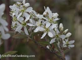 Trees Backyard 5 Best Small Trees For Your Fall Garden Art Of Stone Gardening