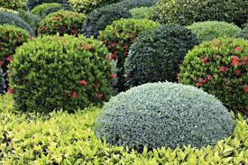 perennial flower bed shrubs and plants plant information u what is