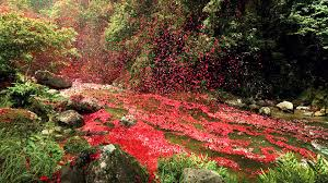 volcano flowers 8 million flower petals on a in costa rica hd