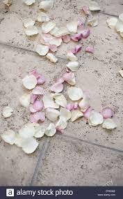 fresh petals fresh organic confetti pink dried petals on the