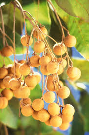 native brazilian plants pictures of various tropical fruits