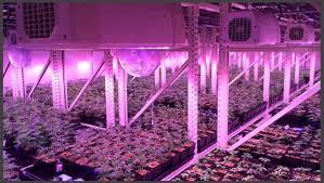 most efficient grow light cannabis vertical grow system professional installation design