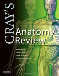 Human Anatomy Exam Questions Anatomy Practice Questions Student Doctor Network