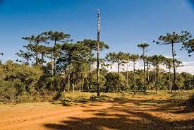 Tropical Savanna Dominant Plants - south america facts land people u0026 economy plant life