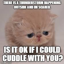 Snuggle Meme - would you let this cute cat snuggle with you i know i would d