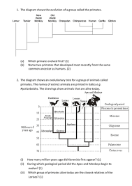 all worksheets evolution worksheets printable worksheets guide