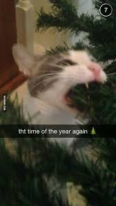 Good Luck Cat Meme - its that time of the year again good luck cat owners cat