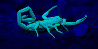 how much are black lights nature s dayglo creatures of the ultraviolet kind getty images foto