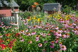 perennial flower garden game rberrylaw perennial flower garden