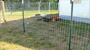 best fences for dogs home decoration ideas