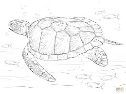 real animal coloring pages green sea turtle coloring page free printable coloring pages
