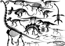 dinosaur skeleton silhouette collection