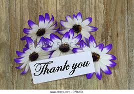thank you flowers thank you note flowers stock photos thank you note flowers stock