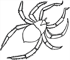 superb good spider color photo brilliant coloring pages