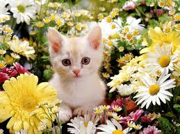cute halloween kitten wallpaper cute white cats wallpaper other health questions pictures fotos