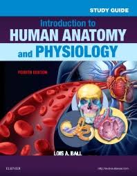 Anatomy And Physiology Games And Puzzles Crossword Study Guide For Introduction To Human Anatomy And Physiology 4th