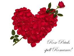 roses for valentines day petals bring to any room whether for your wedding day or
