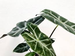 top house plants round up our favorite less common indoor plants the paper