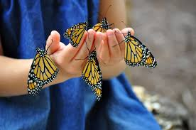native plants that attract butterflies planting with kids butterfly friendly plants for your garden