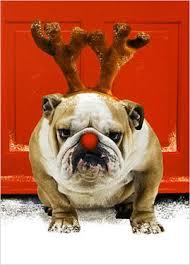 dog christmas cards card invitation design ideas animal greeting cards rectangle